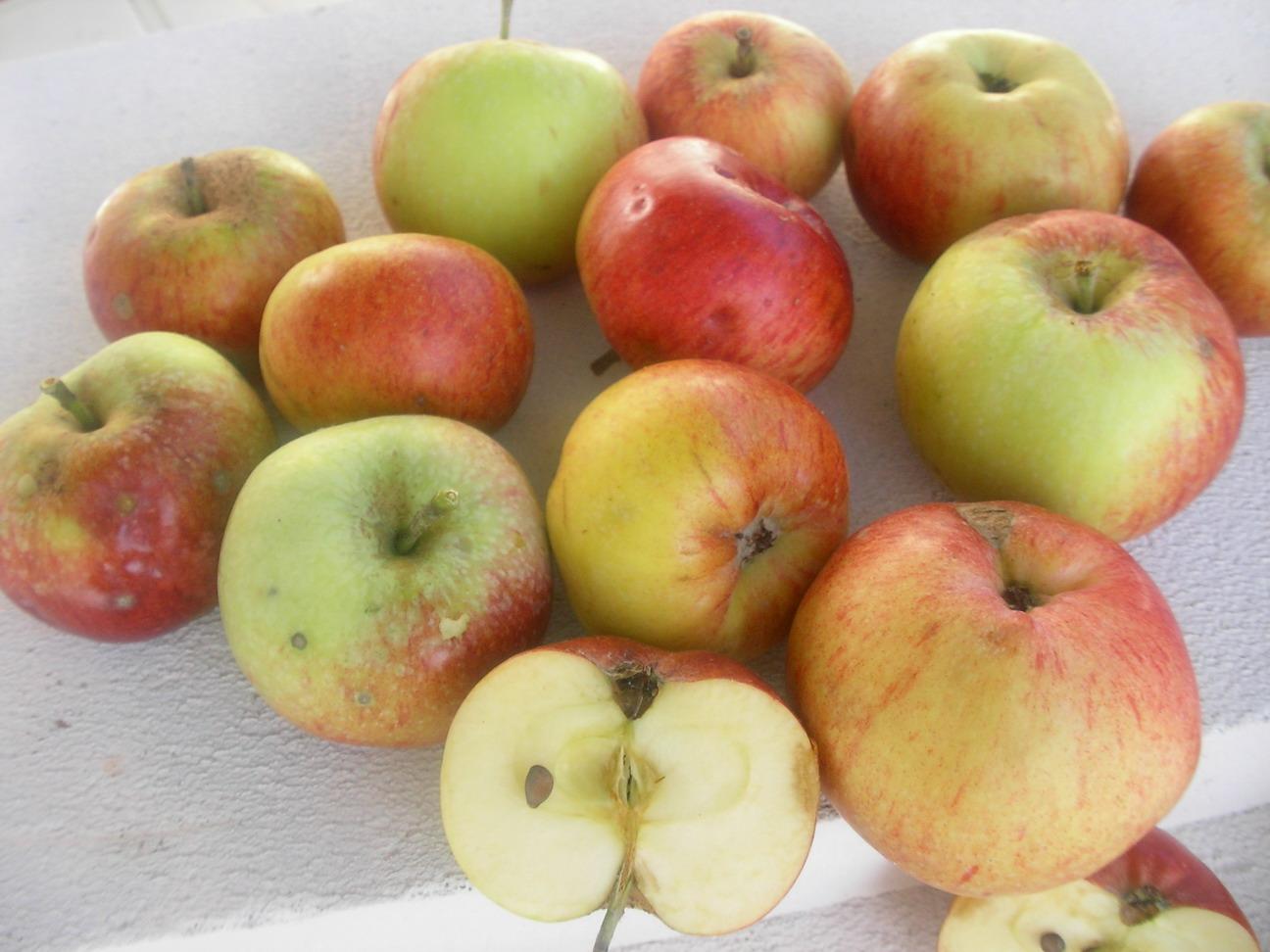 Lescrets fruits et pomologie les pommes the apples guide des pommes guide of apples 1930 - Variete de pomme de terre ancienne ...