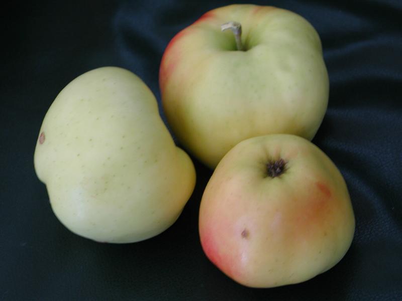 guide des pommes guide of apples calville d 39 ao t. Black Bedroom Furniture Sets. Home Design Ideas